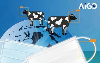 全球防疫+牛臉辨識